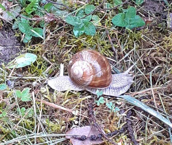 Dans le Morvan, les escargots sont de sortie !
